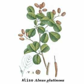aliso_botanica.jpg